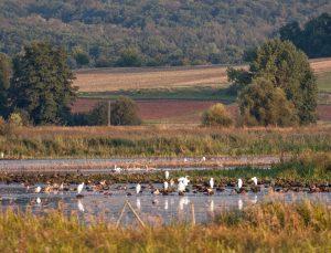 Lieblingsort des Wetterauer Naturschützers Udo Seum: Das Bingenheimer Ried